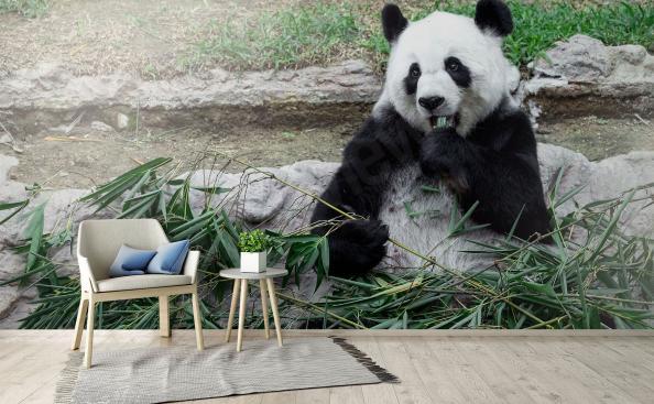 Fototapete Panda und Bambus