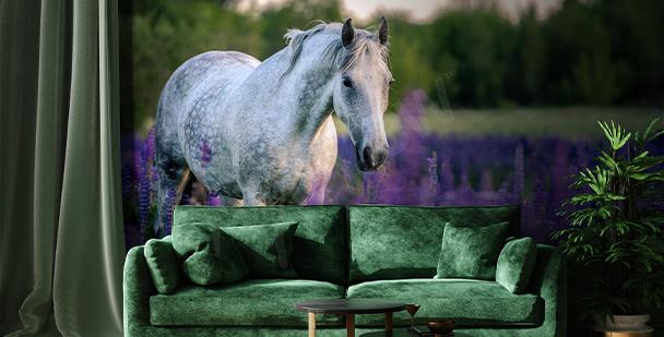 Fototapete Pferd am Lavendelfeld