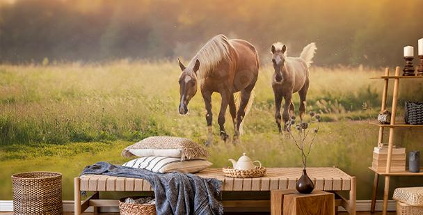Fototapete Pferde bei Sonnenuntergang