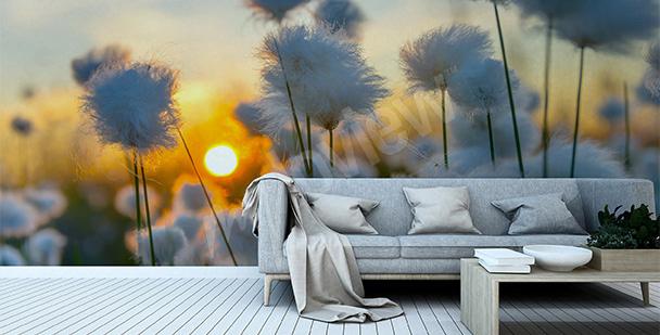 Fototapete Sonnenaufgang auf einer Wiese