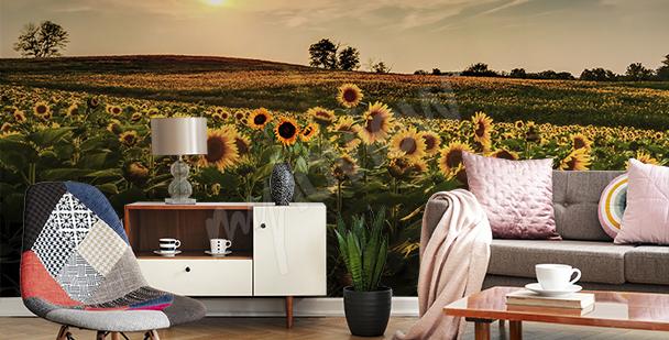 Fototapete Sonnenblumen auf einem Feld