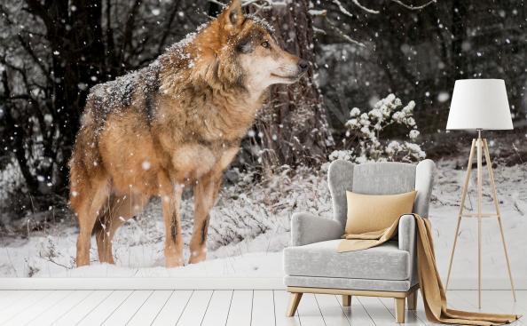 Fototapete Wolf im Wald