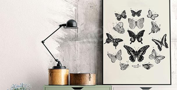 Poster Atlas der Schmetterlinge