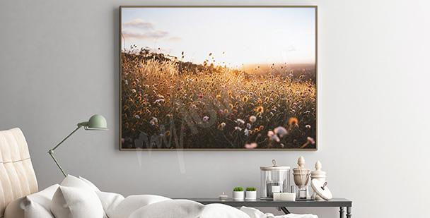Poster Feld beim Sonnenuntergang