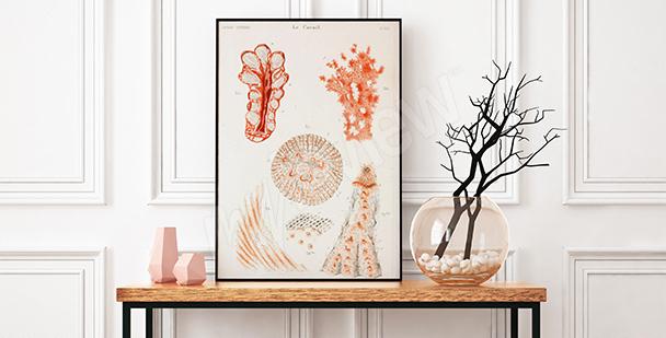 Poster Korallentiere fürs Vorzimmer
