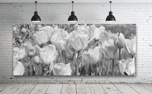Tulpenbild Schwarz-Weiß
