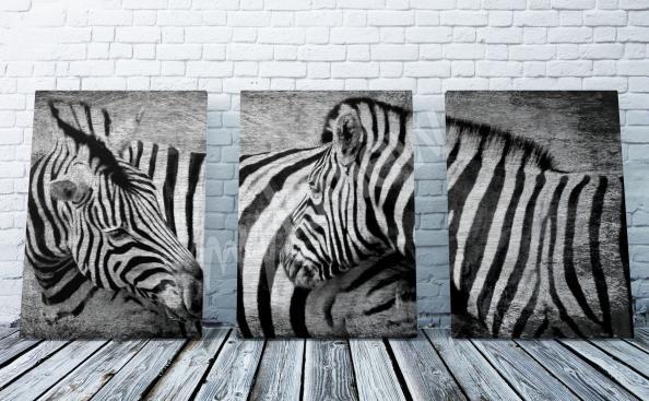 Zebra Bild